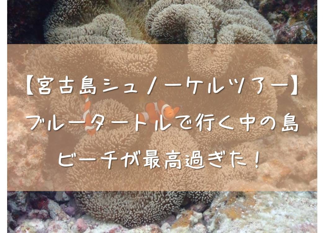 【宮古島シュノーケルツアー】ブルータートルで行く中の島ビーチが最高過ぎた!